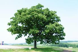 木 自然治癒力